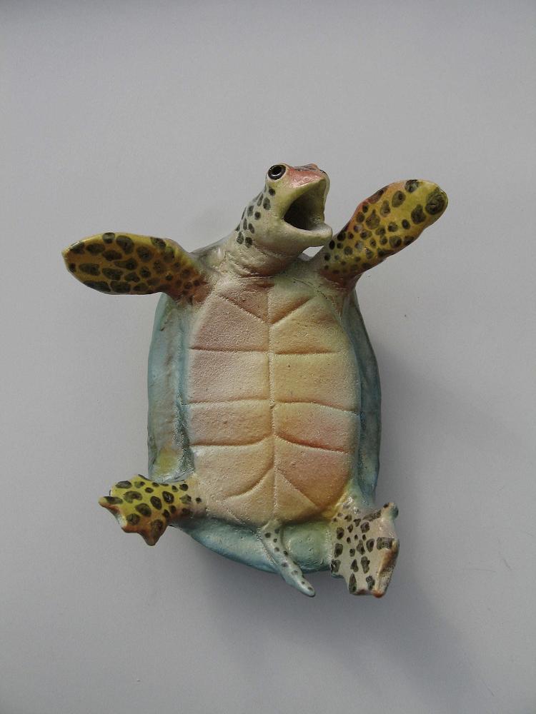 turtleonback
