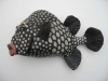 smoothtrunkfish